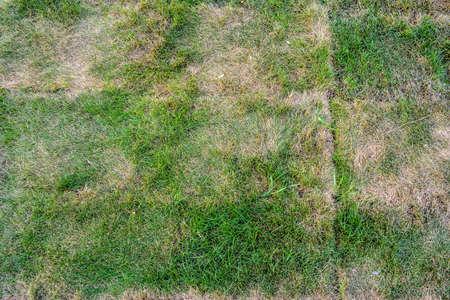 Briquettes de gazon avec de l'herbe en train de mourir. Texture de pelouse mourante avec de l'herbe verte saine et de l'herbe sèche morte Banque d'images