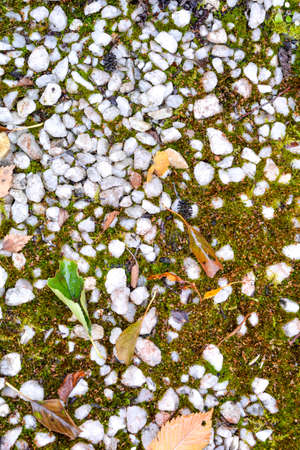 Texture of earth with small white marble stones and growing green moss and some fallen leaves. Rubble and moss on ground 스톡 콘텐츠