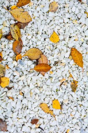 Dead fallen autumn golden leaves on white marble gravel. White pebbles stone texture and background, dry leaves on ground. Nature Zen idea concept background 스톡 콘텐츠