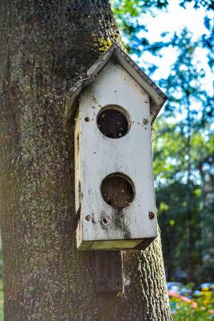 Old empty wooden birdhouse on tree trunk in city. Simple birdhouse. Bird shelter, birdhouse on tree 版權商用圖片