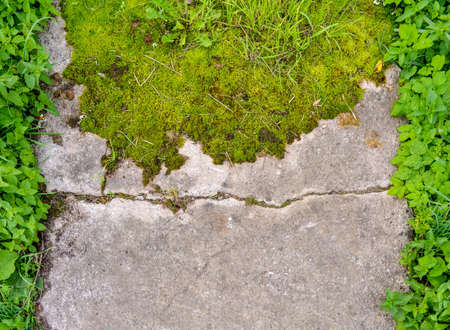 Broken and destroyed old cement walk way floor between them with moss and grass with green grass border on sides. Old path with stones and moss Zdjęcie Seryjne