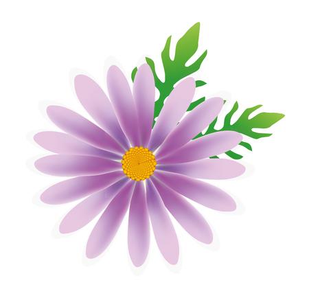 daisy vector: daisy flower vector, daisy vector, flower vector in white background Illustration