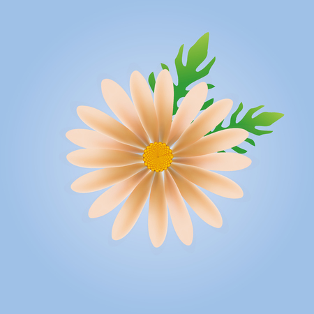 daisy vector: daisy flower vector, daisy vector, flower vector blue background