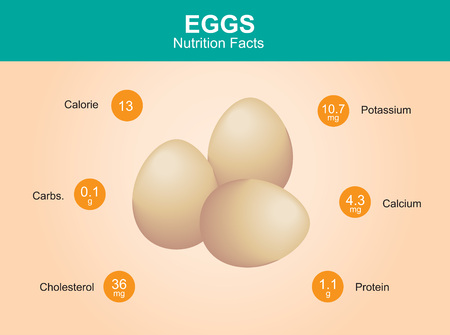 egg nutrition facts egg with information eggs vector