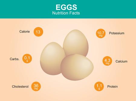 huevo blanco: hechos de la nutrici�n del huevo con huevos de informaci�n vectorial