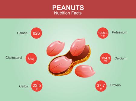 peanut: peanuts nutrition facts peanuts with information peanuts vector