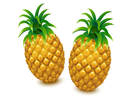 pineapple vector pineapple isolated pineapple