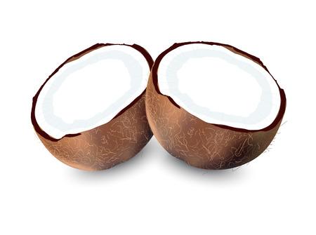 cocotier: Noix de coco, noix de coco isol� vecteur
