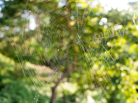 Spider web on green plants background. Standard-Bild