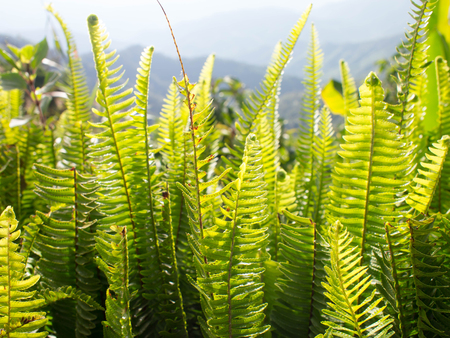 Fern leaf, green leaf in winter season.