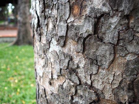 Bark texture, wooden skin. Standard-Bild