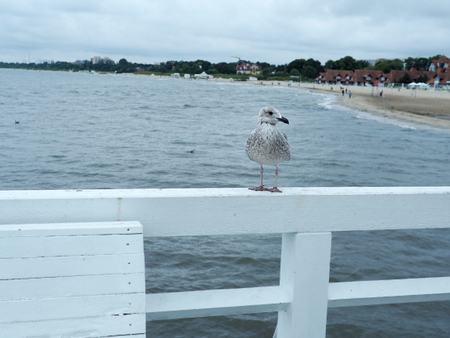 Seagull standing on the white pier at Sopot, Gdansk. Abstract freedom concept background. Фото со стока - 89514210