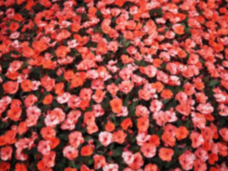 아름 다운 밝은 꽃 장식 배경의 흐리게 추상적 인 배경.