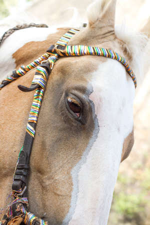 Eye of a horse in a bridle close up