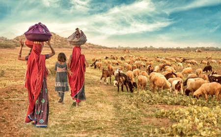 Indian Rural Girl herding Flock of goats 免版税图像