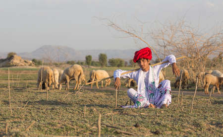 Rajasthani tribal man wears traditional colorful casual and herding flock of sheeps in field