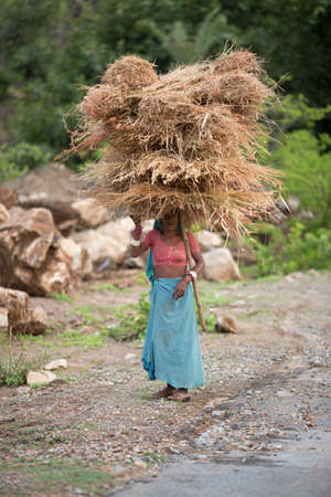 JHALORA, RAJASTHAN, INDIA - JULY 4: Garasiya community woman carrying hay over head, Garasiya are an Indian community in the state of Rajasthan. Jhalora, Rajasthan, India 4 July 2016. 에디토리얼