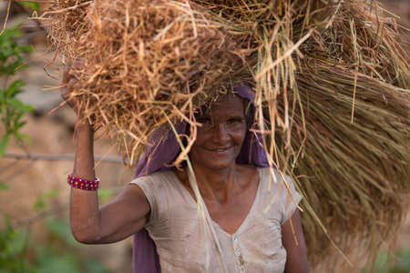 JHALORA, RAJASTHAN, INDIA - JULY 4: Garasiya community woman carrying hay over head, Garasiya are an Indian community in the state of Rajasthan. Jhalora, Rajasthan, India 4 July 2016. Редакционное