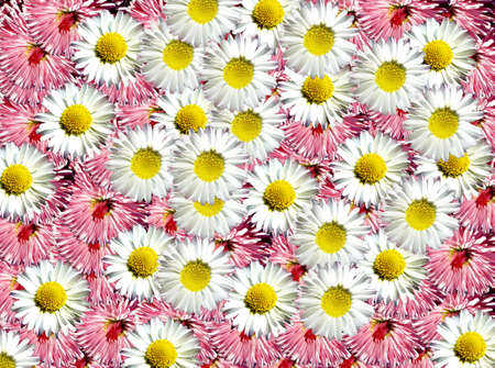 whitw: Beautiful flower background  Stock Photo