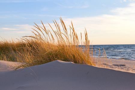 秋の砂丘草。浜の草が茶色くなる秋に、ミシガン湖の海岸に沿う後期の日に風に揺れる 写真素材