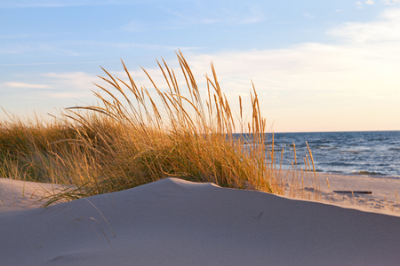 ludington: Autumn Dune Grass. Beach grasses turn golden brown in autumn and sway in the late day breeze along the shores of Lake Michigan Stock Photo