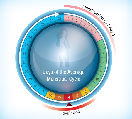 average: Circular flow chart with shiny centre with a female figure showing the average number of days days in a menstrual cycle and the period on menstruation and ovulation Illustration