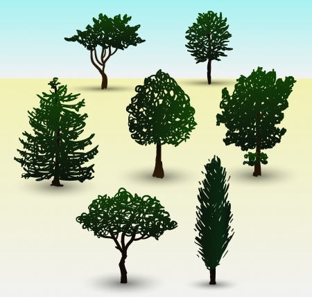 evergreen tree: Hand drawn illustration depicting types of evergreen and deciduous trees