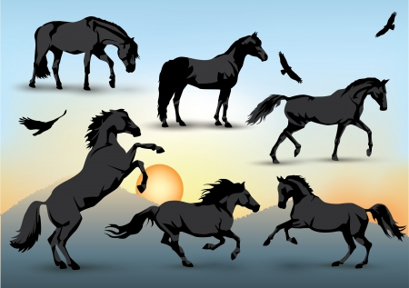 Set of silhouettes of standing, running and galloping horses and birds with a sunset background Stock Illustratie