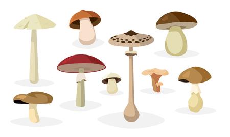 Collection de différents champignons comestibles et toxiques illustrations