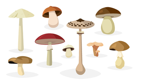 edible: Collection of different edible and poisonous mushrooms illustrations Illustration