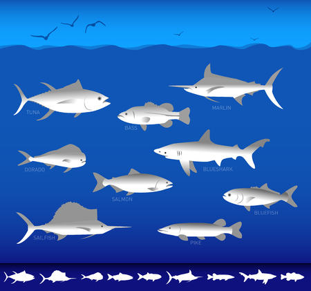 marlin: Collection of silhouettes of different species of ocean fishes