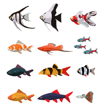 guppies: Collection of freshwater fishes vector illustration in flat style