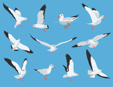 soar: Set of flying and swimming Sea Bird and Seagull Vector Illustration
