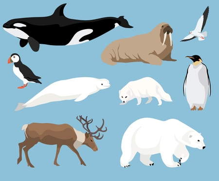 Set of arctic animals illustration in flat style, polar bear, penguin, reindeer, puffin and others Illustration