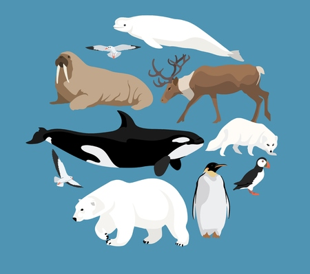 Polar animals circle set with white polar bear and narwhal, whale, reindeer, seal, walrus, arctic fox, penguin, puffin and seagulls