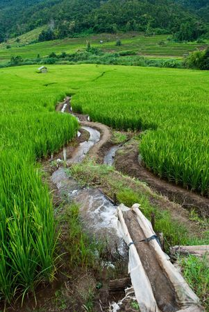 Rice Terraces,Mea chame, Thailand