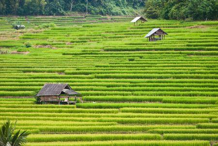 gradas: Arrozales en terrazas, Mea chame, Tailandia
