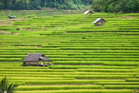 field of thai: Rice Terraces,Mea chame, Thailand