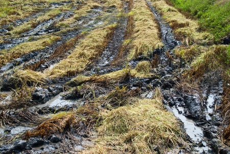 tracks in mud photo