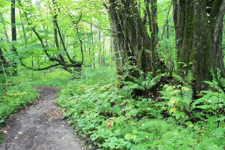 A shot of natural landscape of green forest path Stock Photo - 3596640
