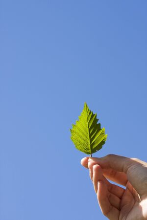Leaf in woman's hand on blue sky background