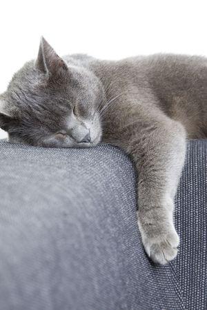 sleepy gray cat on a sofa Stock Photo - 5546484
