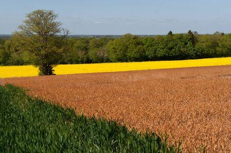 Beautiful landscape with differant colour fields