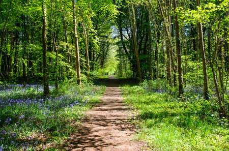 Beautiful footpath in spring  forest Stock Photo