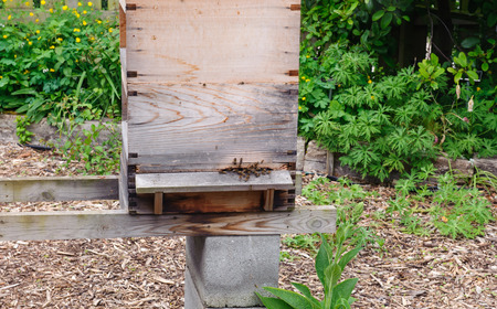 Apiary boxes with bees