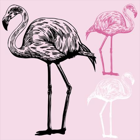flamenco ave: Flamingo Dibujo: Dibujo de un p�jaro flamenco sobre un fondo de color rosa claro, con opciones de color.