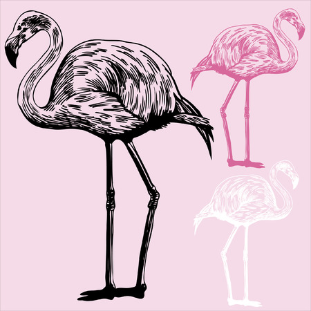 pink flamingo: Flamingo Drawing : Sketch of a flamingo bird on a light pink background with color options. Illustration
