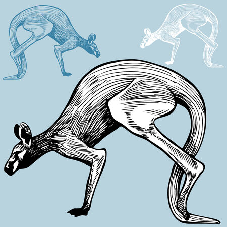 Kangaroo Drawing :  Wild animal drawing in a pen and ink style with color options.