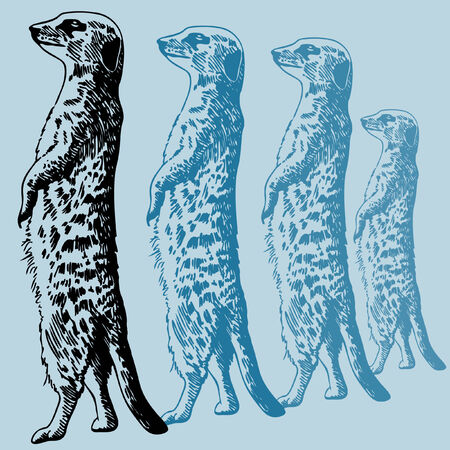 Meercat Standing Drawing : Wild animal drawing in a pen and ink style with color options.