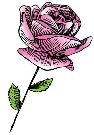 Pink Rose Drawing : Hand drawn pink rose stem image line art.